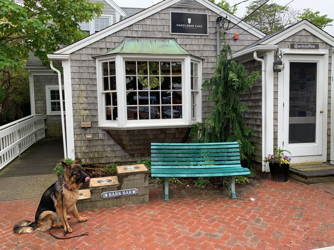 Dog outside of Handlebar Cafe