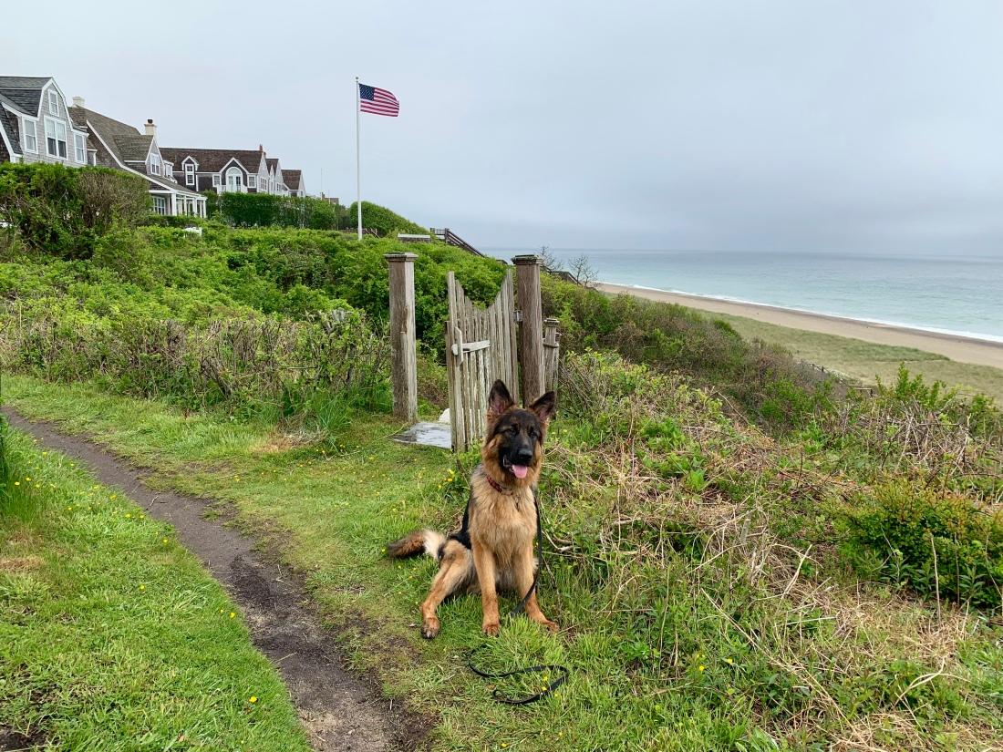 dog sitting at the Sconset Bluff Walk