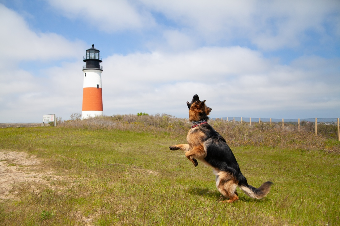 dog jumping in front of a lighthouse