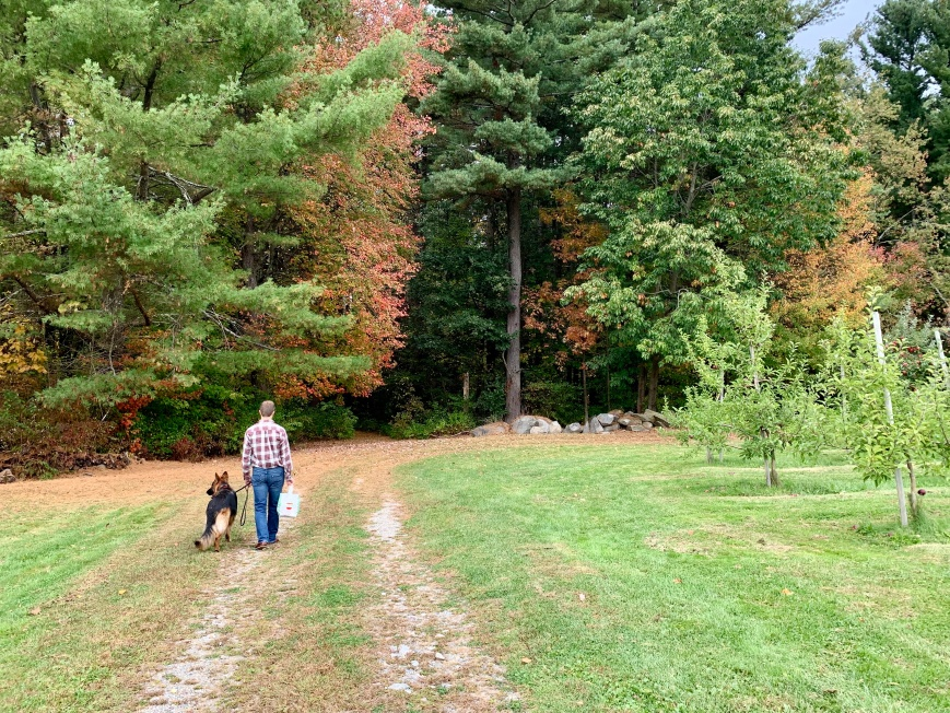exploring a dog-friendly apple orchard